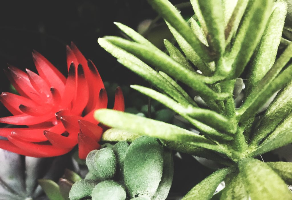 #FreeToEdit #interesting #photography #fake #nature #drama #red #green #greens #nice