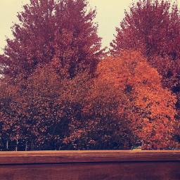 fall leaves freetoedit