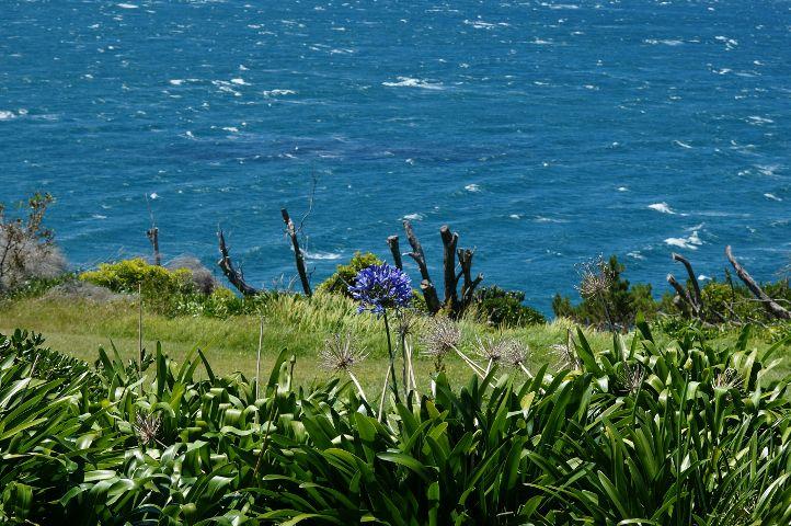 #flower,#australia,#2016,#travel,#freetoedit