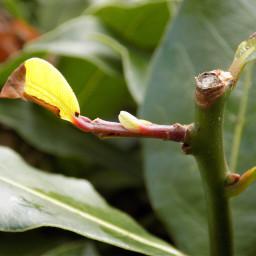 macro nature natural green leaf