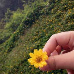 love feelings beautiful flower photography
