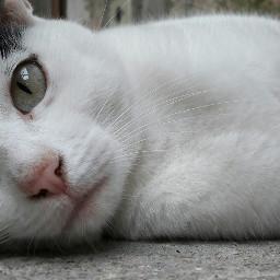 catty cat kitten snout animal freetoedit