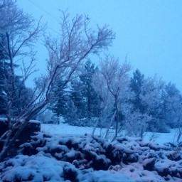 dawn winter snow