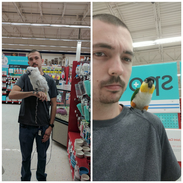 Hanging out with Caesar the Umbrella Cockatoo and Zoey the Black headed Caique today. Check out @pearlparrotrescue to see more of these birds. Check out our Facebook page too.
