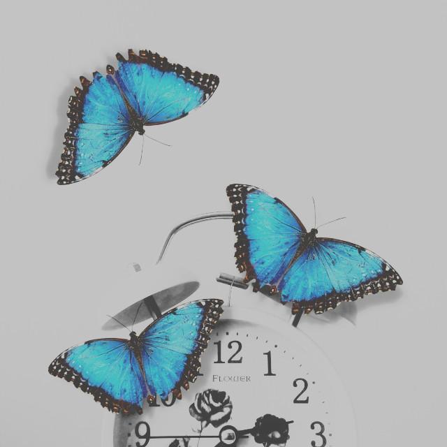 #FreeToEdit    Original idea by @ellenissss  #clock #butterflies  #blackandwhite  #blue