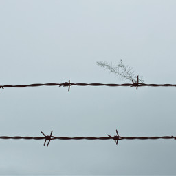 barbedwire wildplant cloudyskybackground againstthelight silhouette