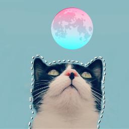 freetoedit remixoftheday cat