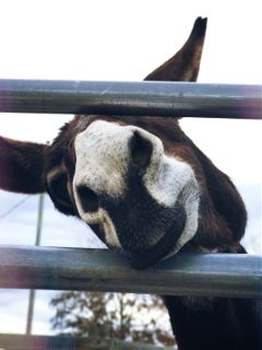 donkey petsandanimals farm nature cute