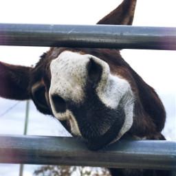 donkey petsandanimals farm nature cute