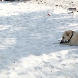 freetoedit doglover dog