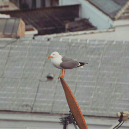 birds bird birdsphotography birdwatching freetoedit