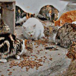 freetoedit animals petsandanimals cats