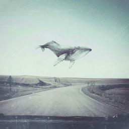 humpback whale whalewatching whaleshark road freetoedit