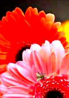 freetoedit colourful flowerslovers nectar nectarcollectors