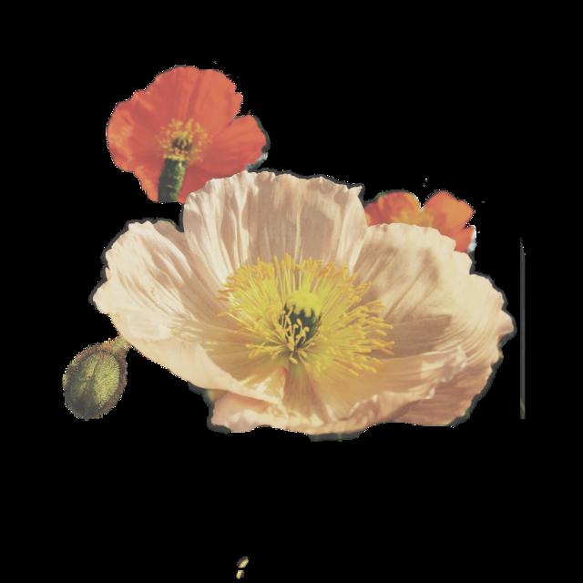 #FreeToEdit #ftestickers #flower #nature #vintage