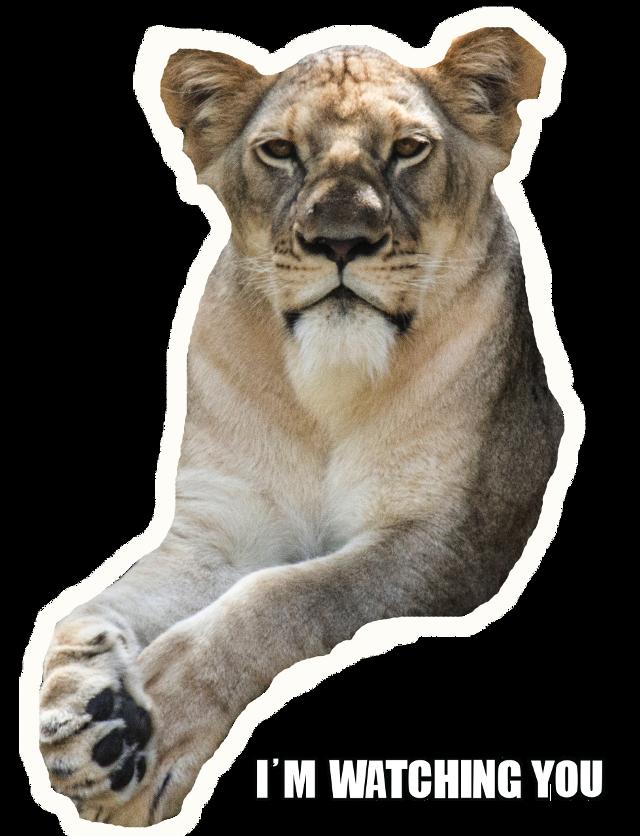 #freetoedit #ftestickers #fun #meme #lion