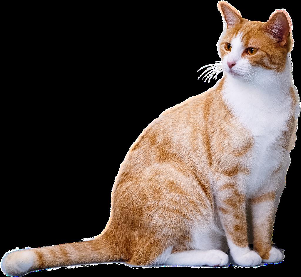 #freetoedit #ftestickers #cat