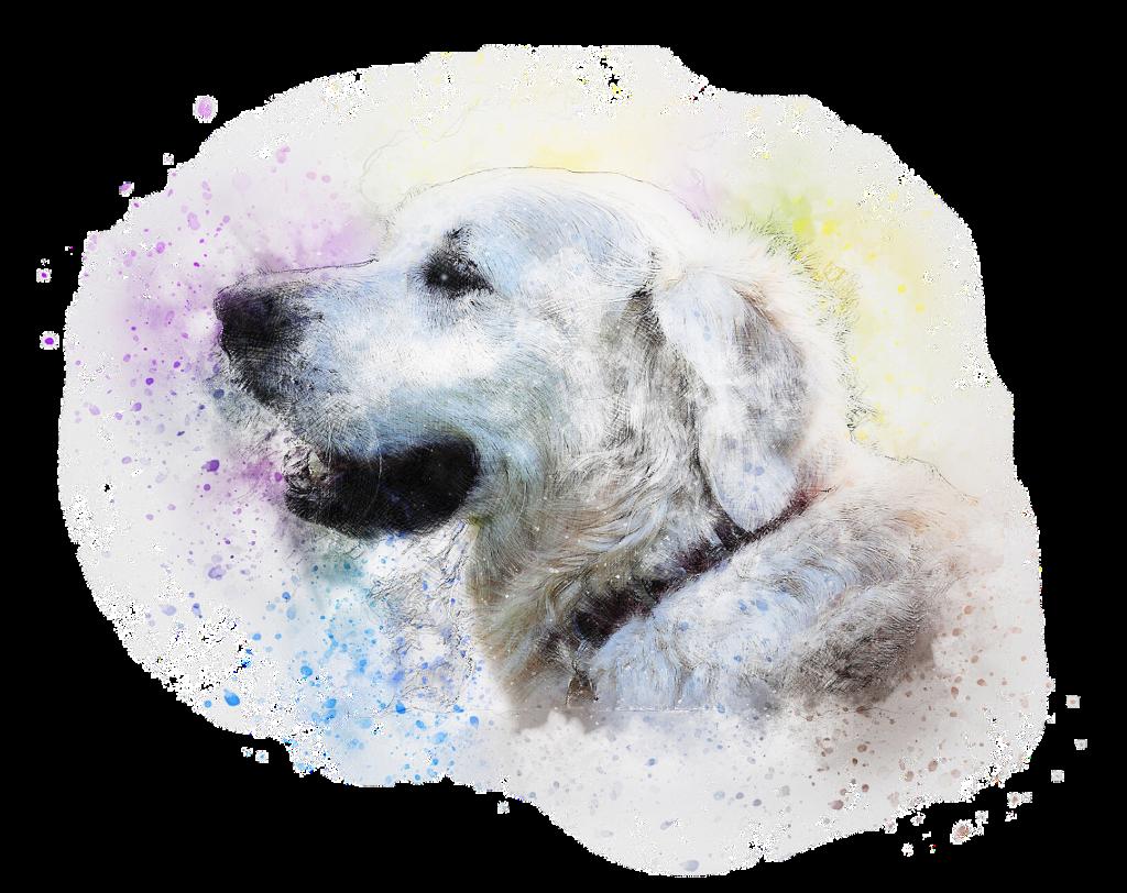 #freetoedit #ftestickers #dog#FreeToEdit