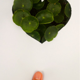 love plant plants leaveslovers leaves freetoedit