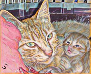 hilights cats catslove editbyme