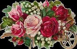 rosas freetoedit