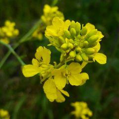 flowers yellowflower yellow nature travel freetoedit