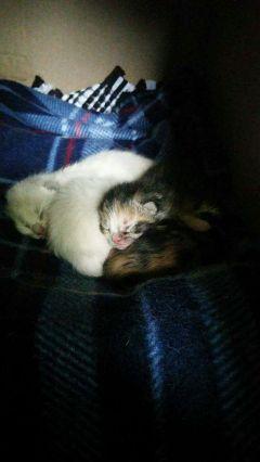 freetoedit kittens myphoto